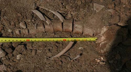 Фрагменты скелета, найденного в склепе селения Хот.